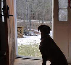 Front door - hopeful