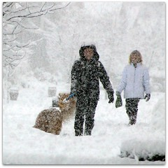 Snowkeh (~~J) Tags: winter dog snow women bokeh letitsnow snohomishcountywashington stateofwashington snowkeh nasasgpm