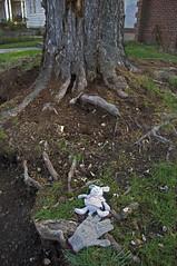 (Caitlin H. Faw) Tags: winter usa house tree rabbit bunny green grass animal digital toy found washingtondc dc nikon nw december dof roots objects stuffedanimal glove discarded friendshipheights 2011 d90 wisconsinavenue jeniferstreet caitlinfaw