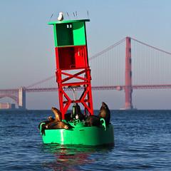Bob (LifeLover4) Tags: sf california animal canon bay boat fishing seagull goldengatebridge pinnipeds boating sanfranciscobay sealions arima ftpoint ggb 75thanniversary greatnature ef70300mmf456isusm 550d buoyant t2i parkpic onearthnrdc lifelover4 stickneydesign ggb75