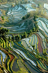 rizires yunnan chine (ichauvel) Tags: china landscape colours couleurs yunnan paysage ricepaddy chine rizieres fotocyfer yuangyuang