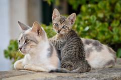 Cat and Kitten (stephanrudolph) Tags: cute animal cat nikon kitten europa europe 500v20f greece handheld 70300mm corfu griechenland animalplanet 70300mmf4556gvr 70300mmvr d700 nikonflickraward saariysqualitypictures