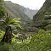 L'incredibile vegetazione verso la Central Hidroelectrica