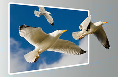 Flight to Freedom (Azurian Vista) Tags: seagulls west birds photoshop out sussex nikon gulls frame shoreham oob bounds greatphotographers nikor cs5 flickraward 55300mm d7000 nikonflickraward mygearandme