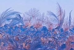 Eiswald_3 (KurtFML) Tags: winter macro closeup makro nahaufnahme eisblumen frostwork nikkor105mmf28gvrmicro wetterhimmeljahreszeit