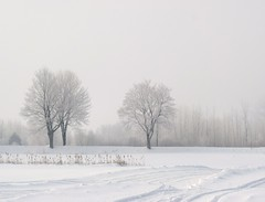 Les arbres frileux. Trees chilly (Amiela40) Tags: morning cold tree fog frost arbre froid brume givre matin douceur platinumheartaward matindegivre treesdiestandigup ruby5
