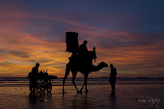 DUSKYEVENING (smrafiq) Tags: travel winter pakistan sunset sea public place traditional camel scape karachi wrath sindh seaview prancing smrafiq gettyimagespakistanq12012 gettyimagesmiddleeast seaviewkarachii