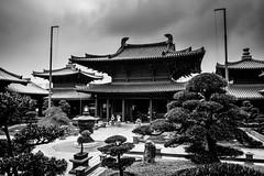 Po Lin Monastery (Bokeh-Dokey) Tags: trees garden hongkong monastery polin penjing diamondhill