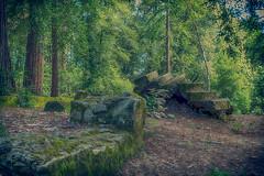 miller house ruins 3.jpg (susanm53@verizon.net) Tags: california trees stone wall stars ruins serene redwoods mtmadonna millerhouse
