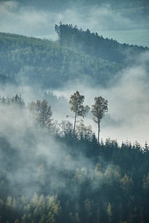 Misty Ardennes