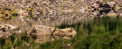 Boulder in Lake (rich trinter photos) Tags: lake reflection boulder goose alpine mountainlake mountainloophighway laketwentytwo