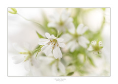 Light and reflection (saundersc29) Tags: white reflection yellow spring wildflowers sigma105mm naturethroughthelens nikond750