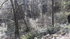 20160331_095240 (ks_bluechip) Tags: creek evans trails preserve sammamish usa2106