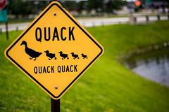 340:365 Quack, quack, quack! (Woodlands Photog) Tags: sign mall duck woodlands texas crossing caution
