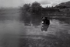 Tranquilos nosotros (Javalactico) Tags: bw byn film lago uruguay minas kodak campo pelicula aire praktica uy rollo lavalleja supertl1000