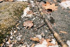 (Doug J.) Tags: trees winter snow detail film nature wet water leaves forest 35mm snowflakes 50mm moss woods nikon dof kodak fresh dirt f2 f3 firstsnow snowfall portra ai 160 f3hp roods