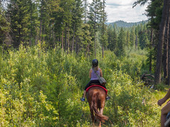 Ride Away (briantolin) Tags: horse forest britishcolumbia riding kelowna equestrian womanridinghorse