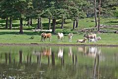 laguna la Nava (reyes66) Tags: la laguna nava