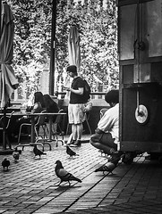 Swimming With Pigeons (TMimages PDX) Tags: road park street plaza city people urban blackandwhite monochrome birds buildings square portland geotagged photography photo image pigeons streetphotography streetscene sidewalk photograph pedestrians pacificnorthwest avenue vignette fineartphotography iphoneography
