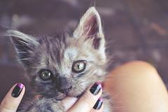cat2 (kmilamilanany) Tags: cat nikon rosa preto gato felino unha d3100