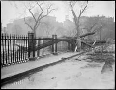 Storm raises havoc Boston Common (Boston Public Library) Tags: weather storms floods lesliejones
