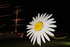 Giant Ox-eye Daisy at Night (tarmo888) Tags: flower wonderful finland giant europe turku nightshot illuminated capture wildflower asteraceae turu lill compositae oxeyedaisy anthemis leucanthemumvulgare puhkus vacationtravel mayweed chrysanthemumleucanthemum photoimage dogfennel sooc flashlighting sonyalpha sony geosetter turku2011 geotaggedphoto nex3 sel18200 year2011 foto gpsloggerforandroid