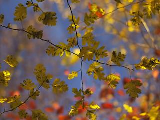 Colours. L'été Indien. Indian summer. Autumn colours. Fall. Herbst.
