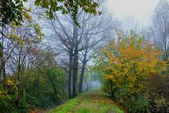 Magic of Autumn (mbald60) Tags: bologna autunno colori bosco magia pianura oasi bentivoglio larizza panoramafotográfico