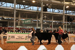 IMG_7392 (Brownfield Ag News) Tags: beef indianapolis congress hoosier