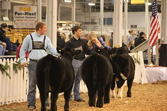 IMG_7416 (Brownfield Ag News) Tags: beef indianapolis congress hoosier