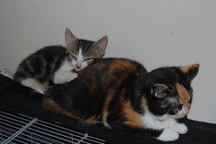 Keiko & Pip (*Red~Cyan* (Pro- 2.4 Million+ Views- Thanks all!)) Tags: sleeping cats pets snuggle hug kittens pip cuddle keiko
