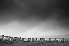 Here's looking at ewe kid (andyholmfirth) Tags: park winter peak pennines holme ewes
