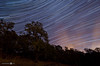 Star Trails in Napa (andreaskoeberl) Tags: california longexposure blue sky tree silhouette northerncalifornia night clouds dark stars lowlight nikon colorful forrest illuminated napa stitching rotation stitched startrails napacounty 1116 d7000 tokina1116f28 nikond7000 andreaskoeberl