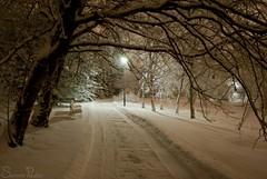 20101214_11095b (Fantasyfan.) Tags: road winter snow cold tree topv111 finland garden dark bench botanical lights topv555 topv333 frost path atmosphere oulu fantasyfanin oulunlääni siirretty