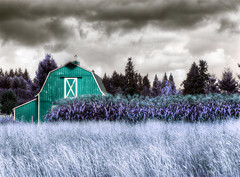 Red barn infra-red (jodi_tripp) Tags: red storm grass taggedout vancouver barn corn tag1 wa hdr allrightsreserved saywa joditripp wwwjoditrippcom photographybyjodtripp joditrippcom