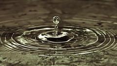law of constancy #2 (m.budde) Tags: pen waterdrop olympus 14150mm flickraward epl1 100commentgroup flickraward5 mygearandme
