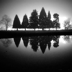 Les dents (sparth) Tags: seattle park trees blackandwhite bw 6 reflection tree fog pine night square washington foggy wa washingtonstate ricoh brouillard sapin marymoor noirblanc 2011 marymoorpark grd4 bwsquare blackandwhitesquare ricohgrdiv grdiv richgrdiv