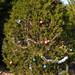 360_Trees_2011_070
