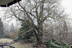 Winter View from the Balcony (Nataraj Metz) Tags: schnee trees winter snow canon germany deutschland europa europe stuttgart walnut bäume deu schneetreiben walnuss badenwürttemberg walnuttree juglansregia walnussbaum kaltental stuttgartsüd gallusstrase echtewalnuss eos550d eosrebelt2i sigma18250f3563dcos