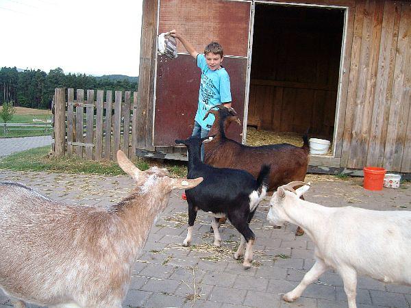 Kind mit Tieren