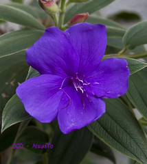 La Belleza Interior. (Joaquin @JCDAtrasto +500K Views) Tags: flowers naturaleza flores macro nature canon eos drops niceshot gotas 2011 50d canoneos50d jcdatrasto