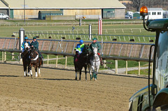 "2011-12-09 (108) r4 #2 Ae Pit & #1 Clearance Sale (JLeeFleenor) Tags: laurelpark marylandracing racing horses jockeys thoroughbreds marylandhorseracing jockey جُوكِي ""赛马骑师"" jinete ""競馬騎手"" dżokej jocheu คนขี่ม้าแข่ง jóquei žokej kilparatsastaja rennreiter fantino ""경마 기수"" жокей jokey người equine equestrian cheval cavalo cavallo cavall caballo pferd paard perd hevonen hest hestur cal kon konj beygir capall ceffyl cuddy yarraman faras alogo soos kuda uma pfeerd koin حصان кон 马 häst άλογο סוס घोड़ा 馬 koń лошадь horaciokaramanos photos photograhy maryland"