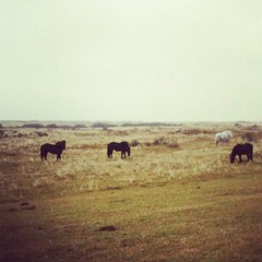 Graaspony's (fiederels) Tags: square squareformat ameland amaro iphoneography instagramapp uploaded:by=instagram