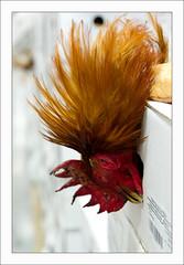 051 (bruxelles5) Tags: flowers food paris france fruits fleurs market meat marche legumes rungis viandes grossiste