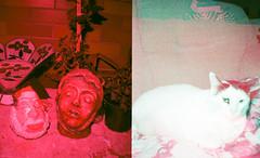 Mistureba (jtaveira) Tags: santa xmas red verde green natal cat 35mm lomo lomography analgica iso400 flash vermelho diana gato fujifilm filme halfframe nobel filtro minidiana dianamini
