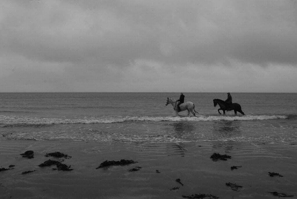 Horses, Ballywalter