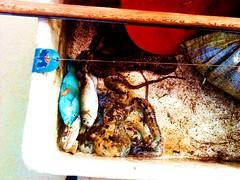 Sea food (Zachary Javelona) Tags: travel lake nature philippines clean clear waters zachary boracay vication javelona