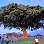 "Ngorogoro Camp <a style=""margin-left:10px; font-size:0.8em;"" href=""http://www.flickr.com/photos/14315427@N00/6599755833/"" target=""_blank"">@flickr</a>"