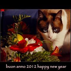 Tanti Auguri, cari amici......... (Osvaldo_Zoom) Tags: happynewyear 2012 auguri buonanno