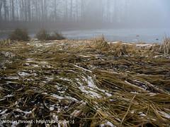 brume (Nicolas Pirson (alias tatactic)) Tags: winter brussels mist snow rouge haze belgium belgique hiver bruxelles neige gel brume givre domaine clotre